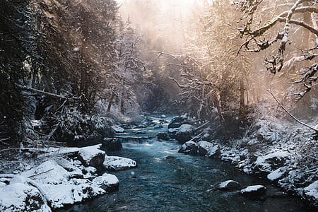 flowing stream in the middle of snow covered forest during sunny day