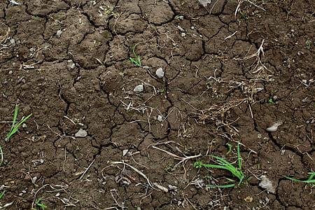 Green Grass on Dry Brown Soil
