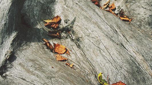 brown, gray, leaves, orange