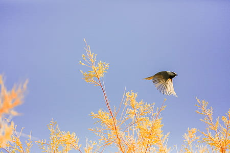 brown and yellow feathered bird flying above yellow flowers