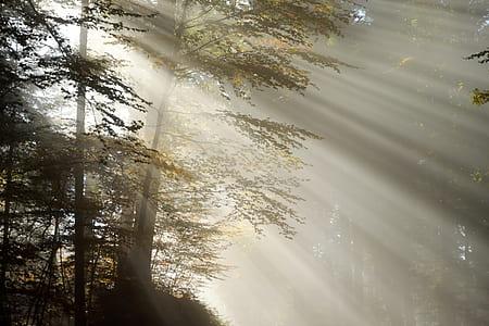 light passing through tree during sun rise