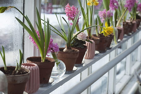 green leaf orchid plants