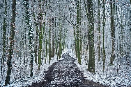 road between leafless trees during winter season
