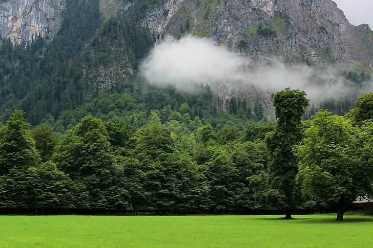 green trees near mountain foot