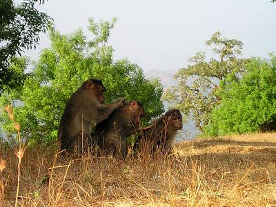 three brown monkeys