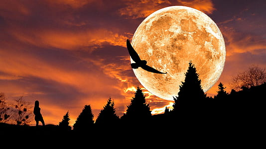 silhouette of bird during red moon