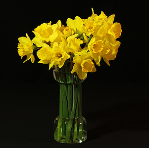 yellow flowers in vase with black background