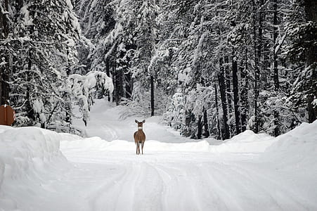 deer in forest duringwinter season