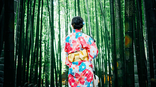 back view of a woman in pink, red, white and blue floral japanese suit surrounded by bamboos photo