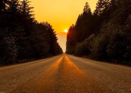 roadway between trees during golden hour