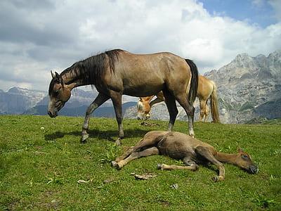 three beige horses