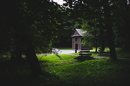 Wooden building in the forest