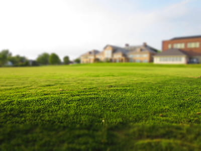 worm's eye view of green gras