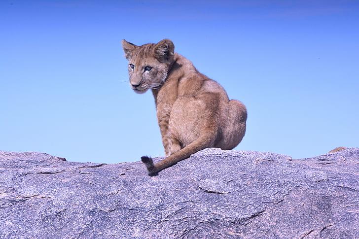 brown feline sitting on gray rock