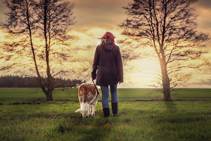 adult brownish-white Saint Bernard and person in black jacket walking on green grasses during sunset