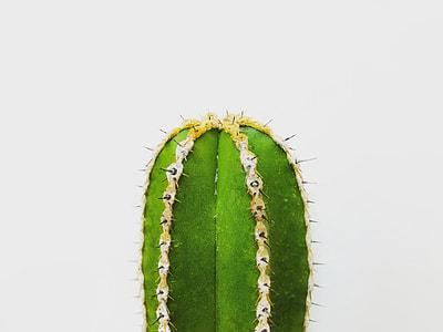 shallow focus photography of green cactus