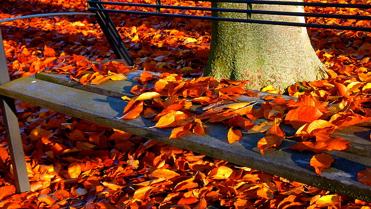 photography of autumn leaves