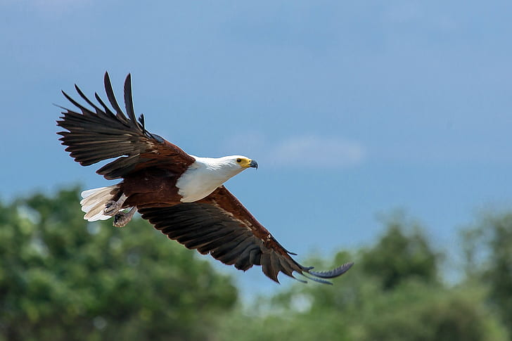 white and brown eagle in sky during daytime