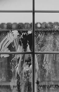 grayscale photo of animal in front of window
