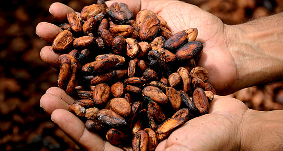 closeup photo of coffee bean on person's hand
