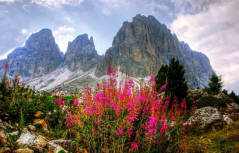 pink flowers near the gray mountain range