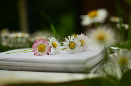Daisy flowers on top of white ruled paper pad