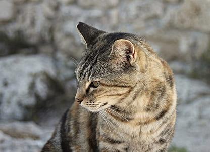 depth of field photo of brown tabby cat