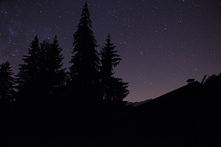 silhouette of trees under starry sky during nighttime