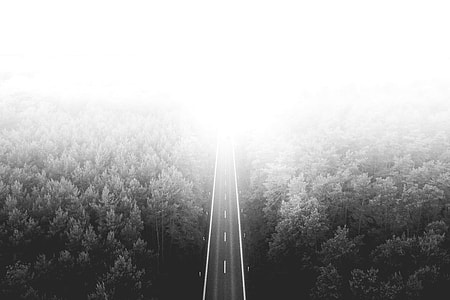 Long Lonely Road Through The Woods