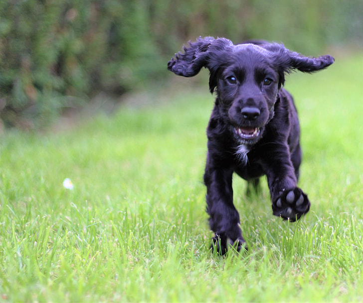 close-up photography of black puppy on lawn grass during daytime