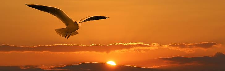 white gull flying during sunset