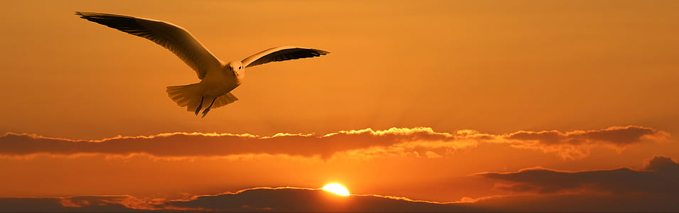 white gull flying during sunset