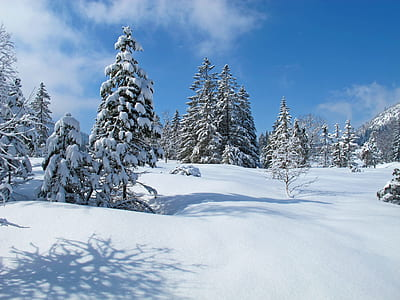 trees covering snow during daytime