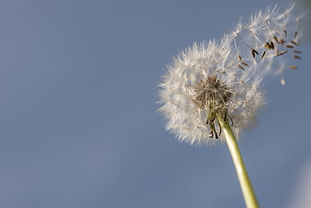 Selective Focus Photography Of Dandelion