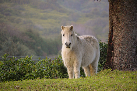 white horse standing on green grass near brown tree