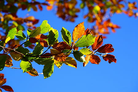 green and brown leaf tree