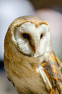 selective focus photography of white and brown owl