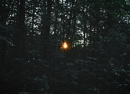 photo of forest with sunlight passing through trees
