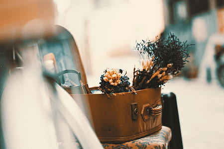 flower in suitcase on top of chair