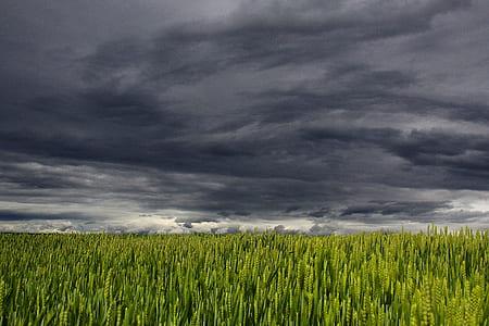 green wheat fields under cumulus nimbus clouds