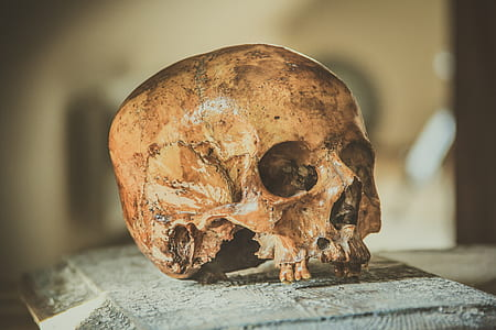 brown human skull on brown wooden panel