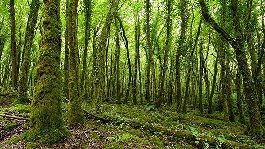 photo of green leaf trees