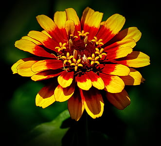 macro photography of yellow-and-red flower