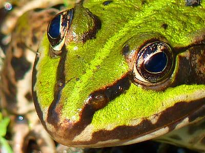 close up photo of green lizard