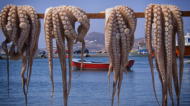 four brown octopus