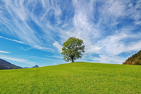 green trees in the middle of grassland during daytime