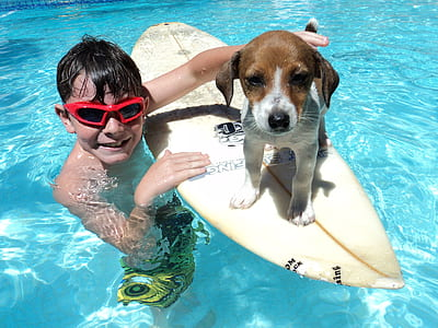 boy with tan and white puppy on surf board