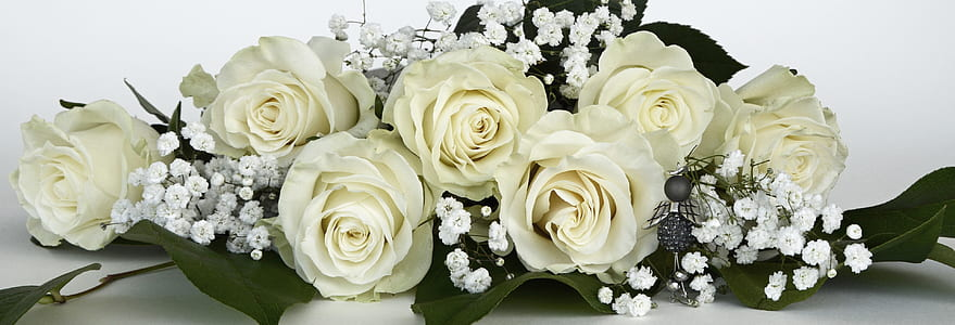 white roses and baby's-breath flowers in bloom