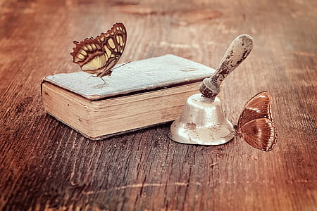 malachite butterfly on book and brown butterfly on grey hand bell