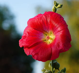 shallow focus photo of red petaled flower
